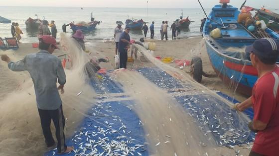 Mùa lưới cá trích ở thành phố biển Vũng Tàu ảnh 7