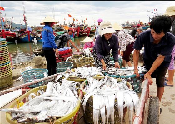 Nhộn nhịp làng biển Quảng Bình ảnh 1