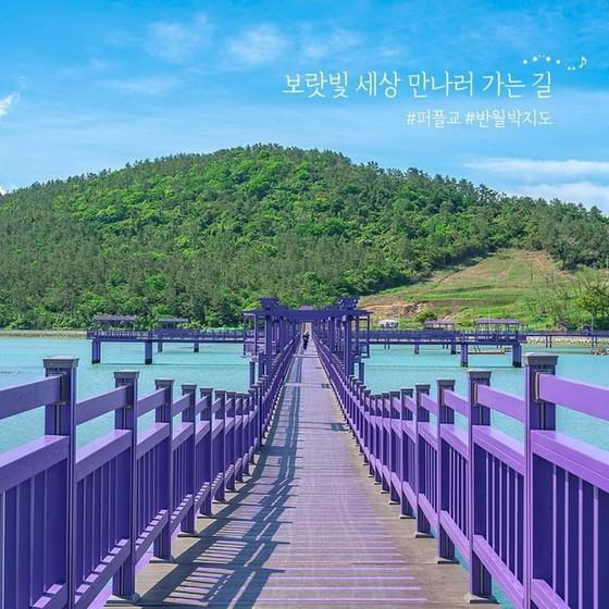 韓國新景點「紫島」四處都是夢幻般的紫色 ảnh 2