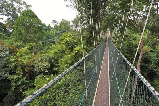 玻璃棧道懸崖吊橋?全球最不可思議的人行步道! ảnh 8
