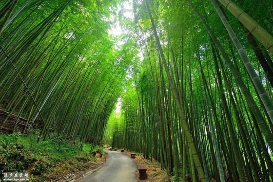 台灣6個「絕美竹林秘境」 走一趟「享受滿滿芬多精」忘卻憂愁 ảnh 4