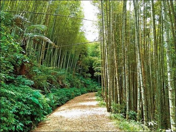 台灣6個「絕美竹林秘境」 走一趟「享受滿滿芬多精」忘卻憂愁 ảnh 5