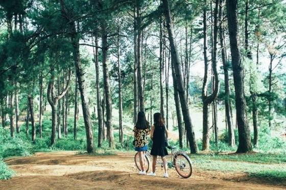 欣賞美麗如畫的樹林 ảnh 1