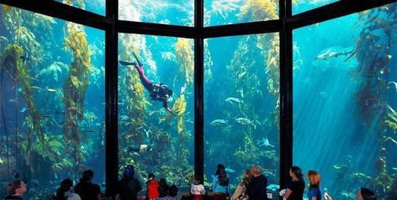 世界11個巨大而神奇的水族館(下) ảnh 1
