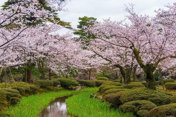 夜燈下的奇幻色彩!日本三大名園——兼六園的秋與冬! ảnh 1