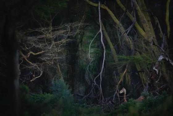 年度自然攝影大獎揭曉,重現侏羅紀世界 ảnh 2