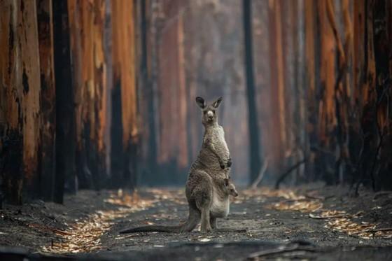 年度自然攝影大獎揭曉,重現侏羅紀世界 ảnh 8