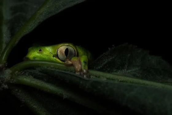 年度自然攝影大獎揭曉,重現侏羅紀世界 ảnh 10