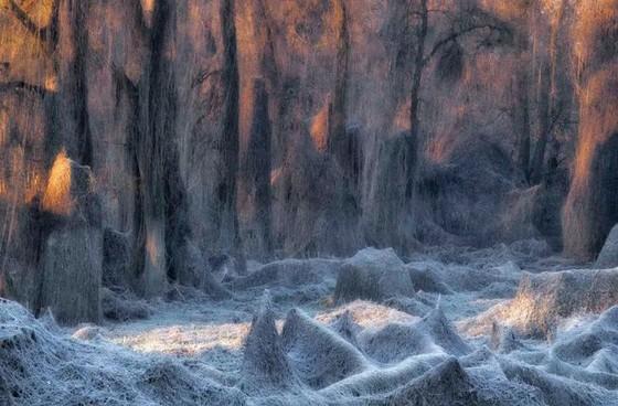 年度自然攝影大獎揭曉,重現侏羅紀世界 ảnh 5