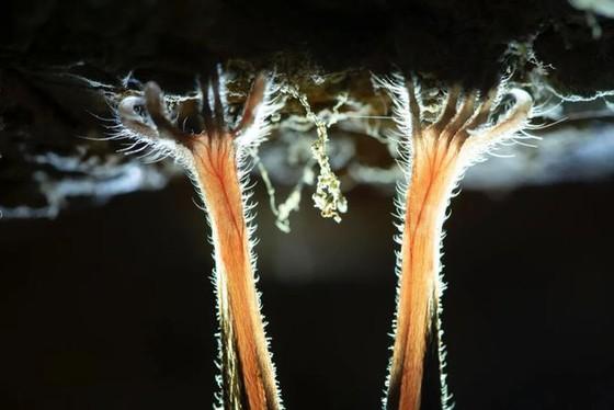 年度自然攝影大獎揭曉,重現侏羅紀世界 ảnh 12