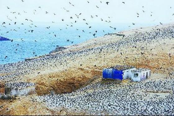 鳥糞島——秘魯人的金山銀山 ảnh 1