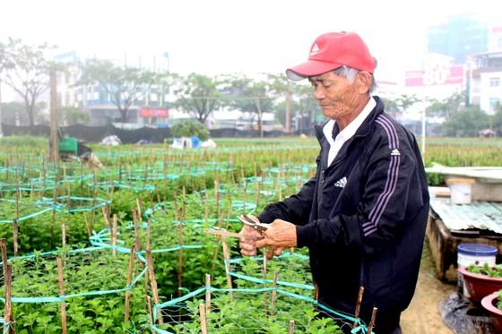 Làng Vân Dương khởi sắc nhờ nghề trồng hoa tết ảnh 2