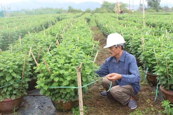 Làng Vân Dương khởi sắc nhờ nghề trồng hoa tết ảnh 3