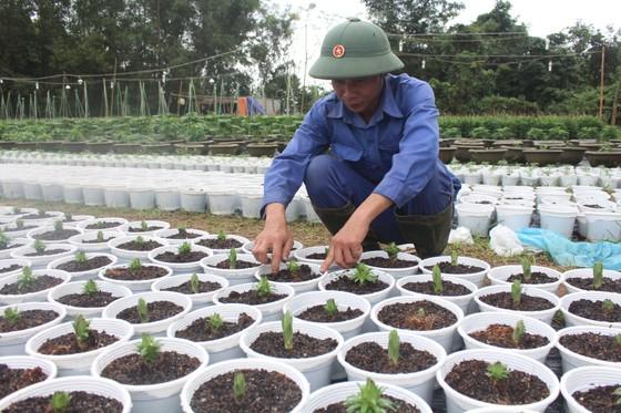Làng Vân Dương khởi sắc nhờ nghề trồng hoa tết ảnh 1