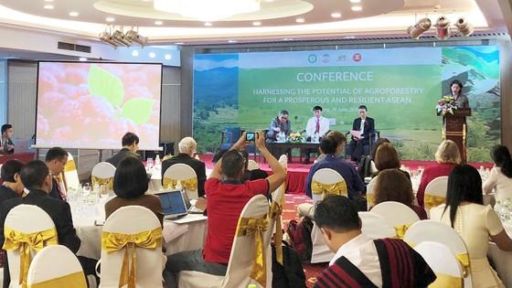 Nông nghiệp và lâm nghiệp là cầu nối để phát triển bền vững ở các quốc gia Đông Nam Á ảnh 1