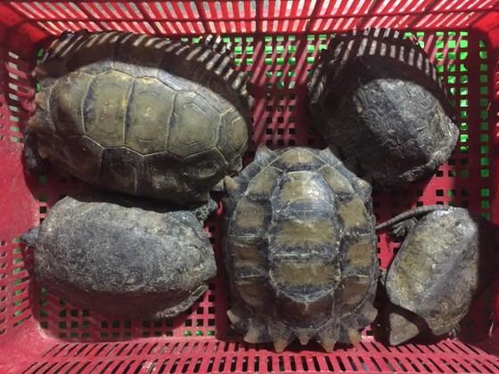 Quảng Nam: Bắt giữ vụ buôn bán trái phép 126 cá thể động vật hoang dã quý hiếm ảnh 1