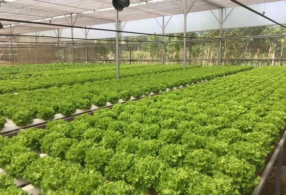 Hòa Ninh hướng đến xây dựng nền nông nghiệp công nghệ cao gắn liền với du lịch sinh thái ảnh 2