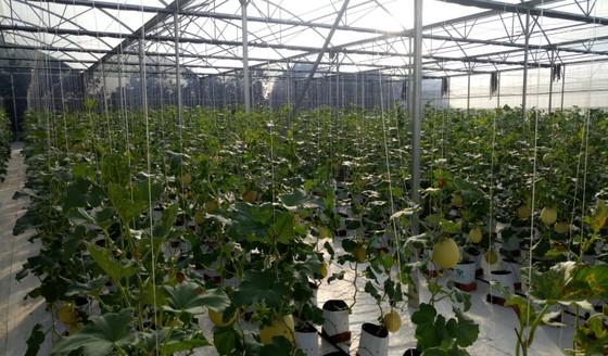 Hòa Ninh hướng đến xây dựng nền nông nghiệp công nghệ cao gắn liền với du lịch sinh thái ảnh 1