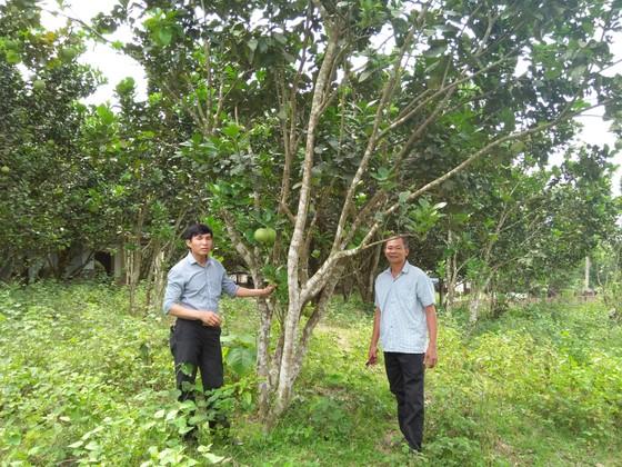 Hòa Ninh hướng đến xây dựng nền nông nghiệp công nghệ cao gắn liền với du lịch sinh thái ảnh 3