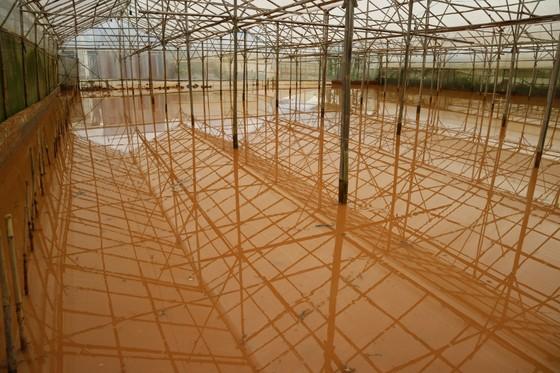 Xem cảnh ngập sâu cả mét nước sau trận mưa lớn ở Đà Lạt ảnh 4