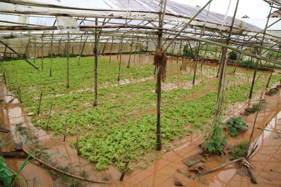 Xem cảnh ngập sâu cả mét nước sau trận mưa lớn ở Đà Lạt ảnh 2