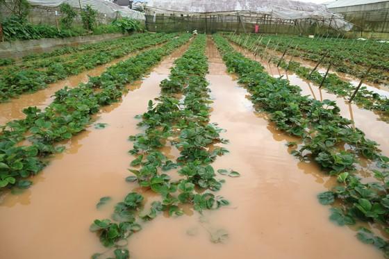 Xem cảnh ngập sâu cả mét nước sau trận mưa lớn ở Đà Lạt ảnh 9