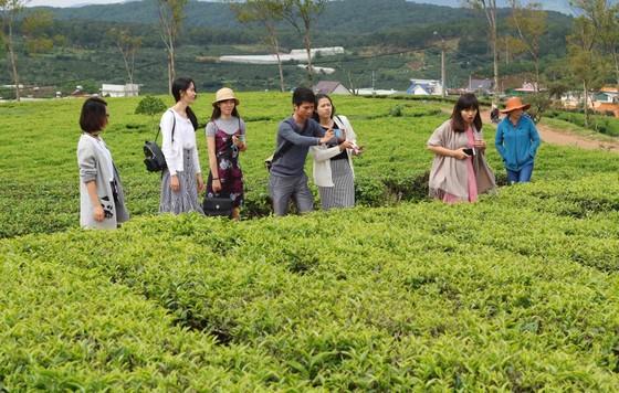 Khám phá vùng trà gần 100 năm ở Đà Lạt ảnh 5