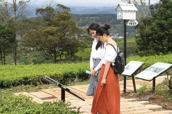 Khám phá vùng trà gần 100 năm ở Đà Lạt ảnh 8