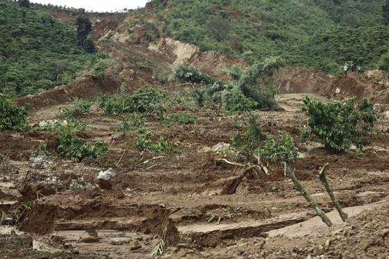 Người dân liều mình vào vùng sạt lở thu hoạch cà phê ảnh 8