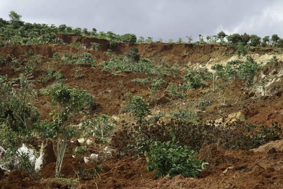 Người dân liều mình vào vùng sạt lở thu hoạch cà phê ảnh 2