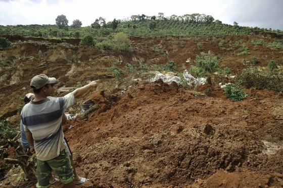 Người dân liều mình vào vùng sạt lở thu hoạch cà phê ảnh 3