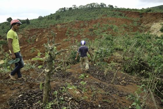 Người dân liều mình vào vùng sạt lở thu hoạch cà phê ảnh 6