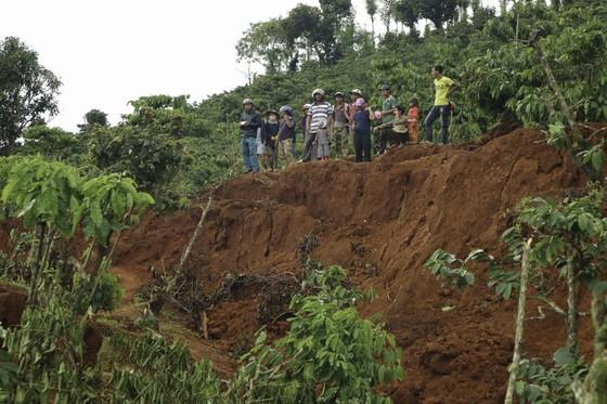 Người dân liều mình vào vùng sạt lở thu hoạch cà phê ảnh 4