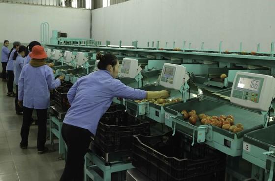 Mở rộng mô hình trung tâm sau thu hoạch tại Lâm Đồng ảnh 1