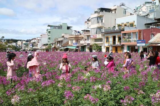 Du khách tấp nập về Đà Lạt nghỉ Tết Dương lịch ảnh 10