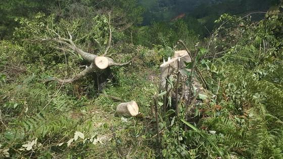 Bắt 11 đối tượng đem cưa máy phá rừng phòng hộ ở Đà Lạt ảnh 2