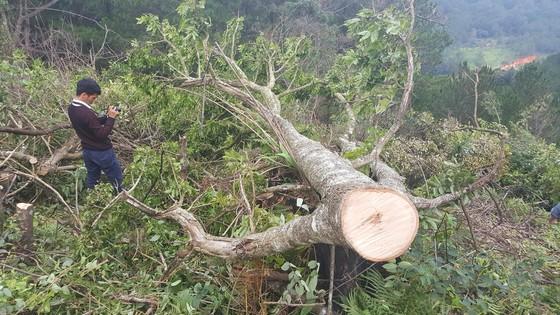 Bắt 11 đối tượng đem cưa máy phá rừng phòng hộ ở Đà Lạt ảnh 4