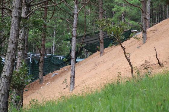 Hơn chục căn nhà trái phép 'mọc' trong rừng thông ở Đà Lạt ảnh 4