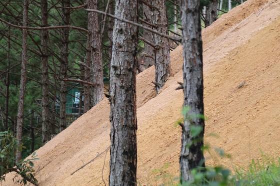 Hơn chục căn nhà trái phép 'mọc' trong rừng thông ở Đà Lạt ảnh 5