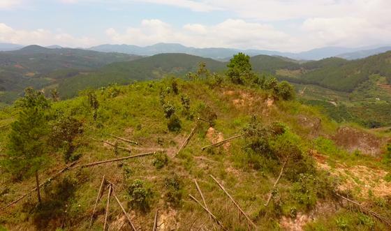 Rừng thông tại Lâm Đồng tiếp tục bị 'cạo trọc' ảnh 13