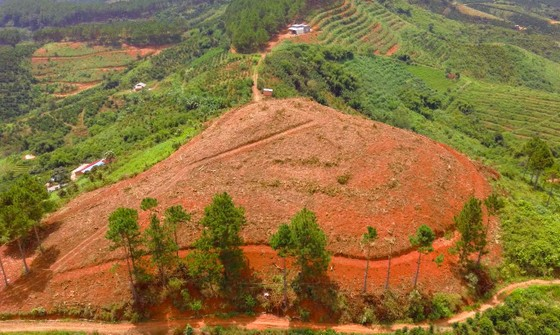 Rừng thông tại Lâm Đồng tiếp tục bị 'cạo trọc' ảnh 14