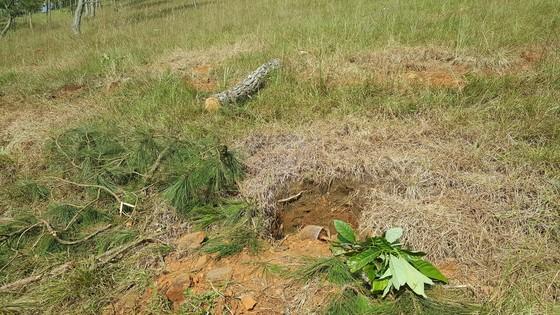 Thuê người cưa thông, lấn hơn 1.200m² đất rừng ở Đà Lạt ảnh 3