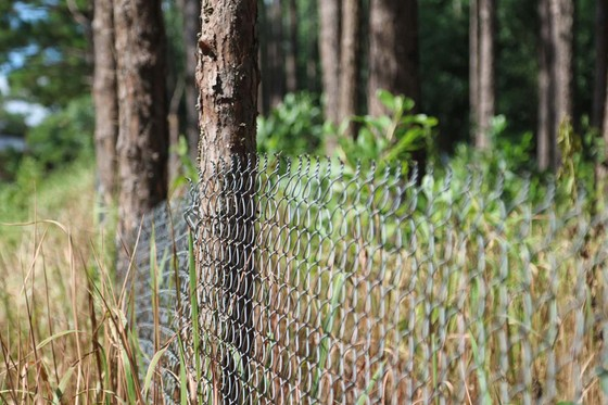 Xử lý trách nhiệm hàng loạt tập thể, cá nhân để xảy ra các vụ phá rừng lớn tại Lâm Đồng ảnh 4