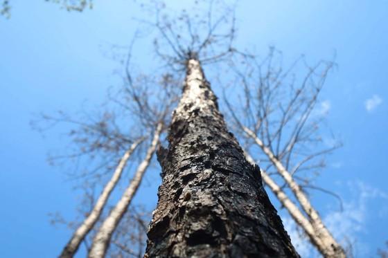 Xử lý trách nhiệm hàng loạt tập thể, cá nhân để xảy ra các vụ phá rừng lớn tại Lâm Đồng ảnh 5