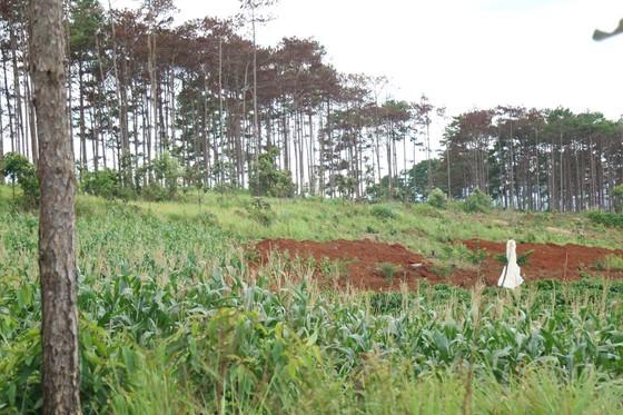 Xử lý trách nhiệm hàng loạt tập thể, cá nhân để xảy ra các vụ phá rừng lớn tại Lâm Đồng ảnh 2