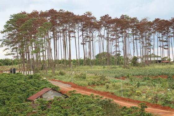 Xử lý trách nhiệm hàng loạt tập thể, cá nhân để xảy ra các vụ phá rừng lớn tại Lâm Đồng ảnh 1