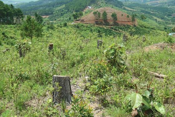Xử lý trách nhiệm hàng loạt tập thể, cá nhân để xảy ra các vụ phá rừng lớn tại Lâm Đồng ảnh 6