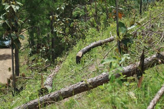 Xử lý trách nhiệm hàng loạt tập thể, cá nhân để xảy ra các vụ phá rừng lớn tại Lâm Đồng ảnh 7