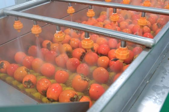 Sấy treo trái hồng Đà Lạt theo công nghệ Nhật Bản ảnh 2