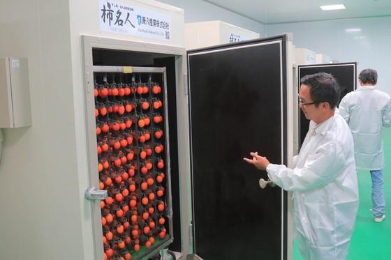 Sấy treo trái hồng Đà Lạt theo công nghệ Nhật Bản ảnh 6